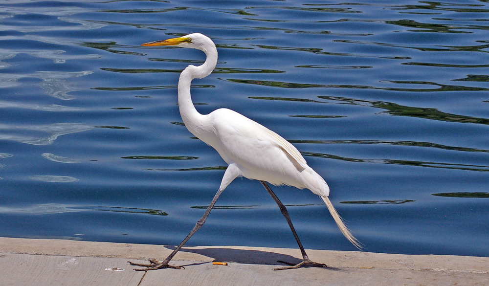 """""""A White Heron"""" Summary, Analysis, and Lesson Plans"""